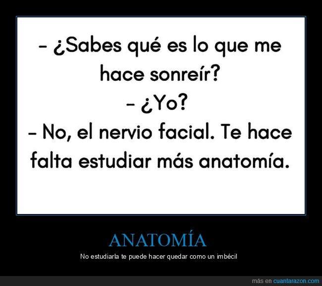 anatomía,nervio facial,sonreír