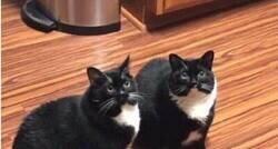 Enlace a Gato duplicado