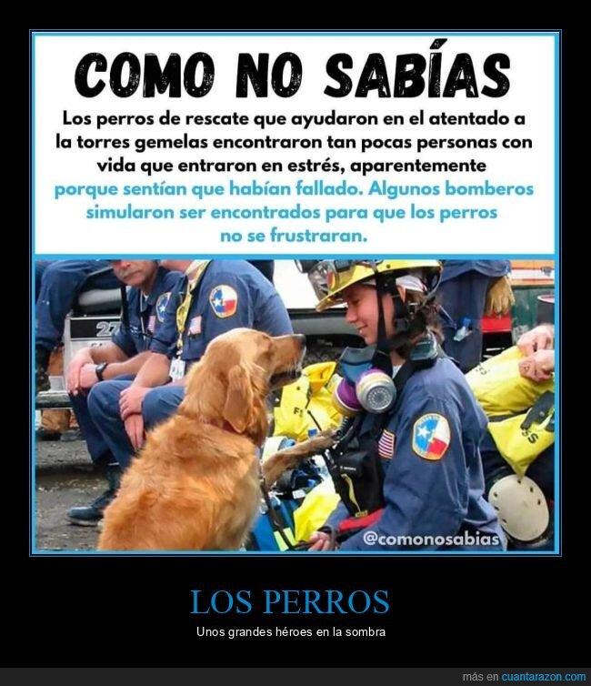 encontrar,frustración,perros,rescate,torres gemelas