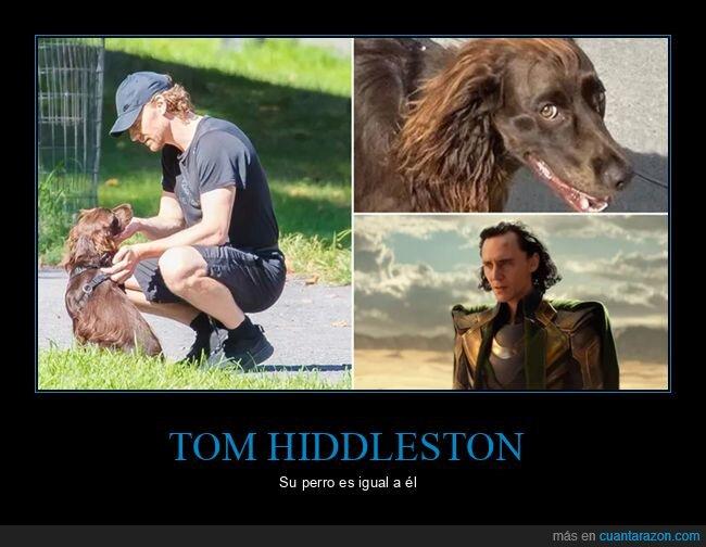 Etiquetasloki,parecidos,perros,tom hiddleston