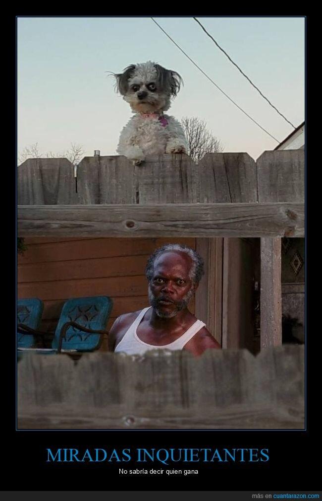 mirada,perro,samuel l jackson