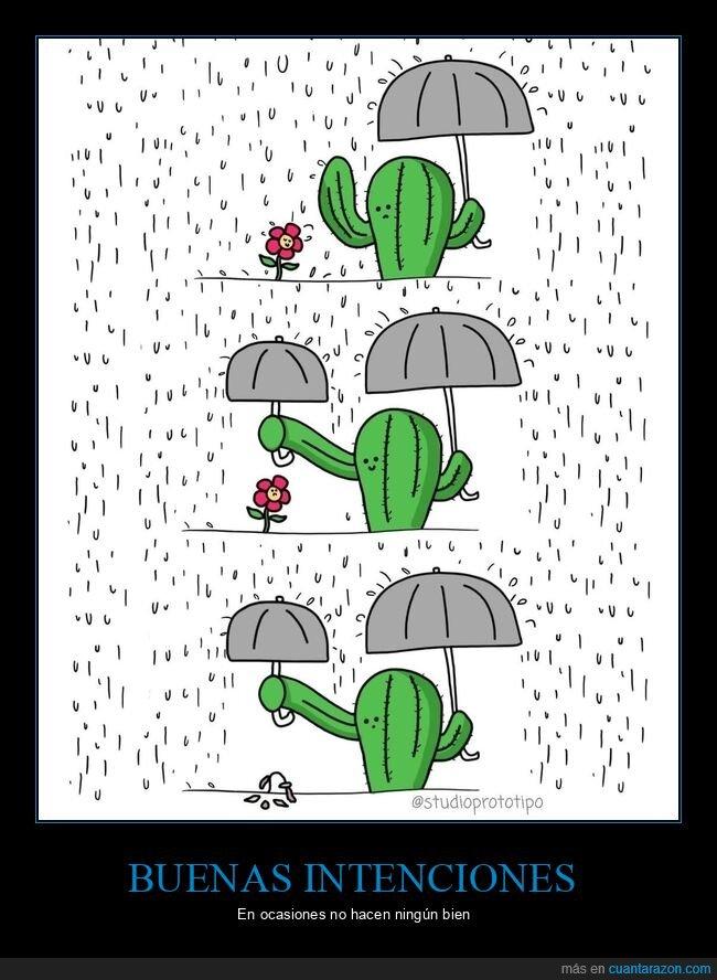 cactus,flor,lluvia,paraguas