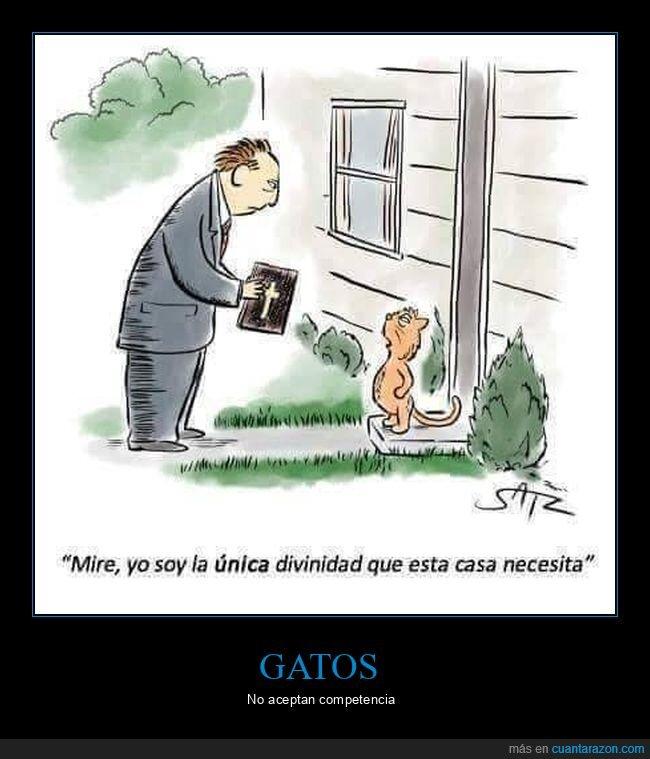 divinidad,gato