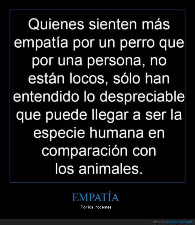 empatía,perro,persona