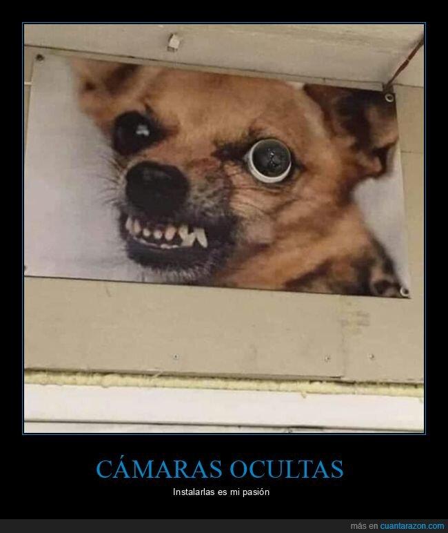 cámara oculta,ojo,perro