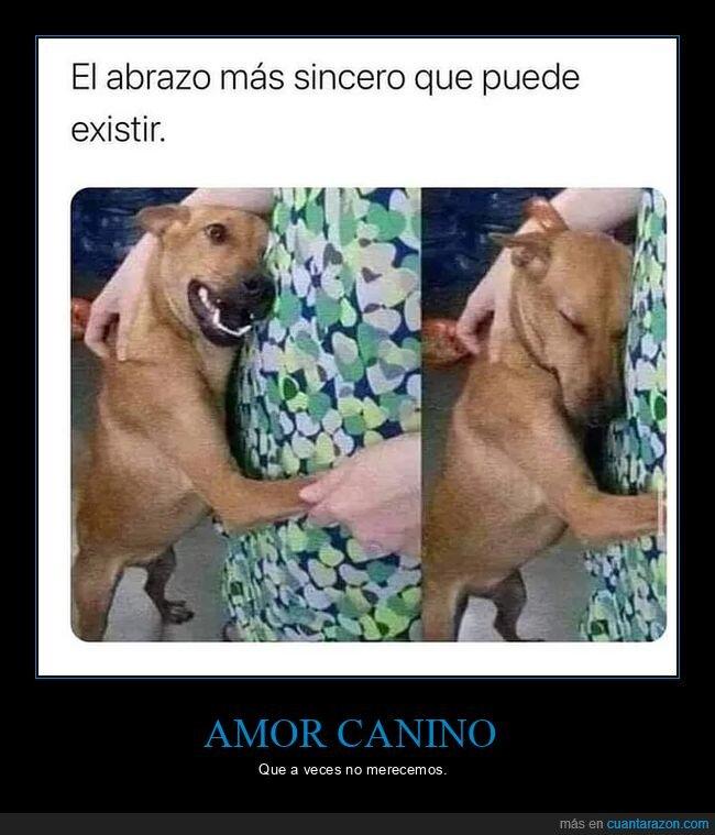 amor,mascota,perro