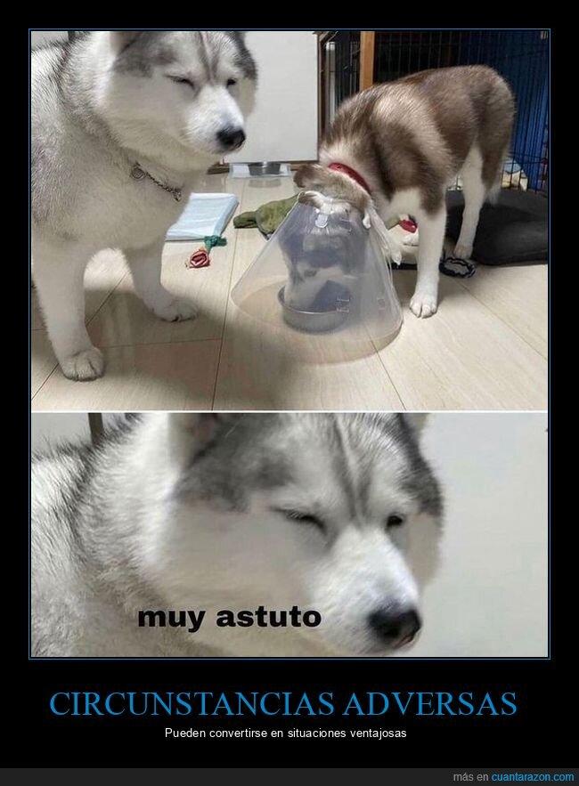 comiendo,cono,perro