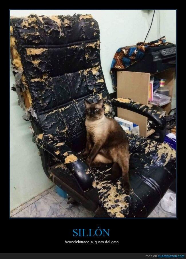 gato,sillón,wtf