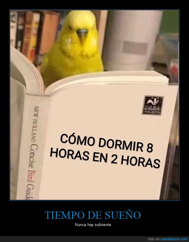 dormir,horas,libro