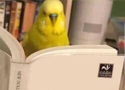 Enlace a El libro que necesitas