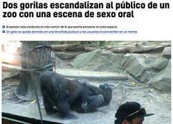 Enlace a Gorilas exibicionistas