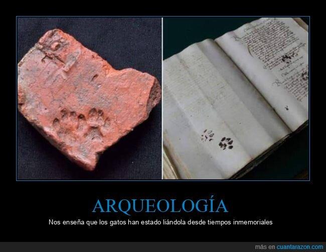 arqueología,fails,gatos,huellas