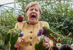 Enlace a Merkel en apuros