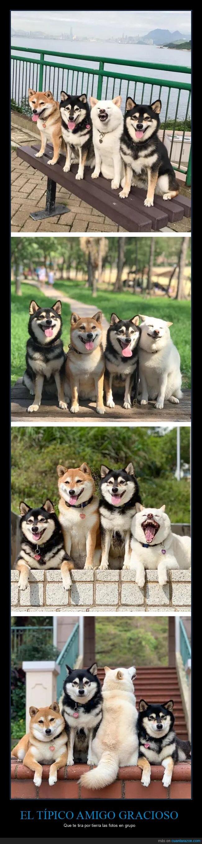 caretos,fotos,perros,wtf