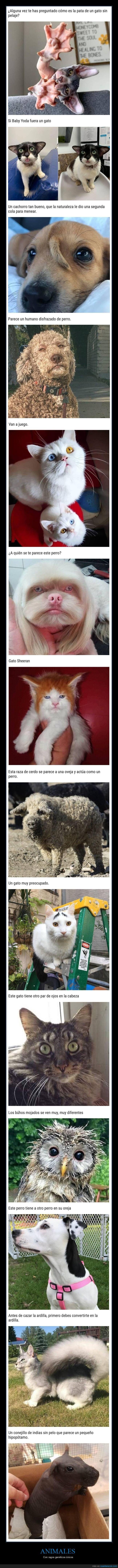 animales,genética