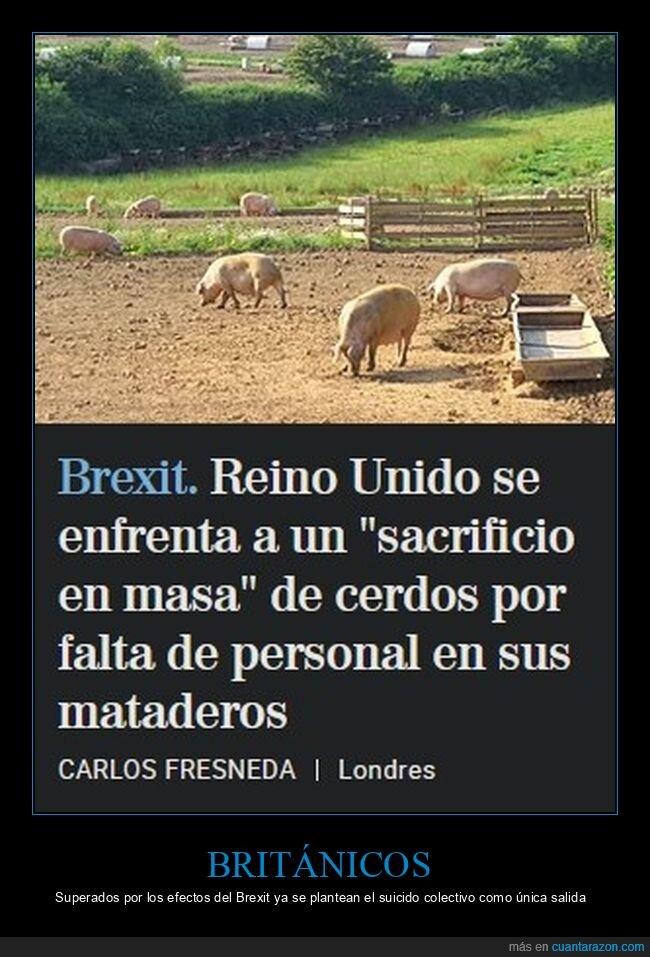 cerdos,mataderos,reino unido,sacrificio