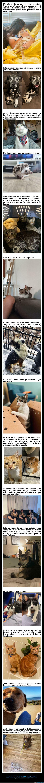 adoptadas,mascotas,rescatadas