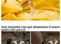 Enlace a Reconfortantes fotos de mascotas rescatadas este mes de septiembre