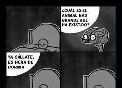 Enlace a Cerebro oportuno