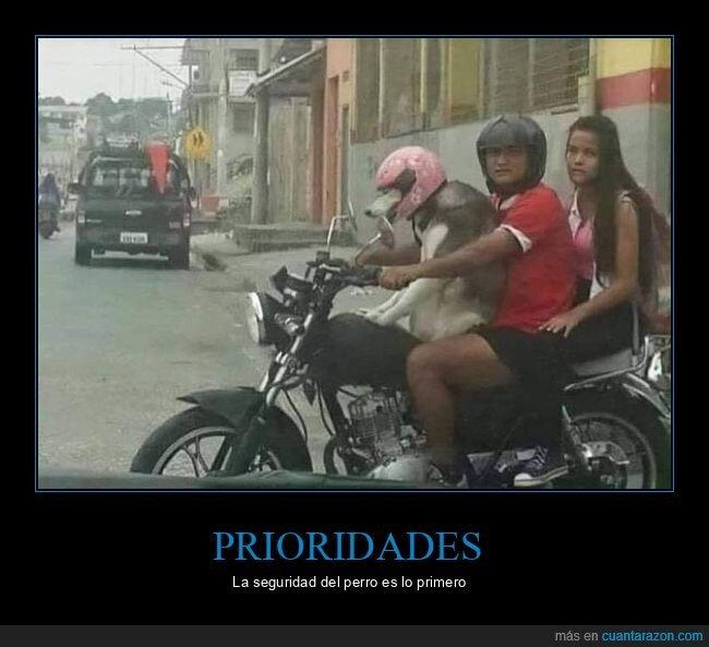 casco,moto,perro