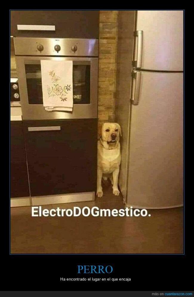 encajar,perro