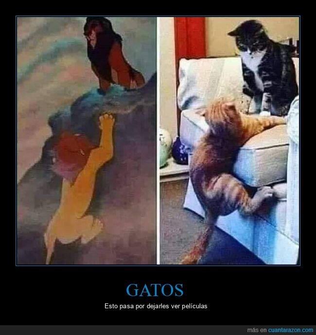 el rey león,gatos