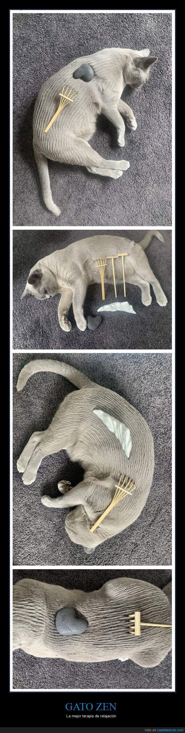gato,relajación,zen