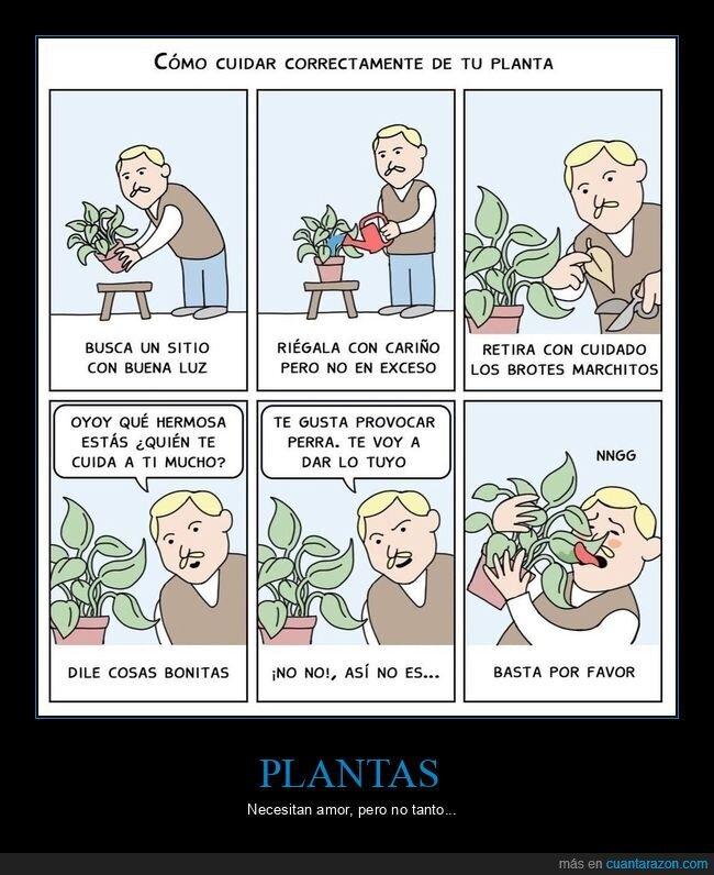 cuidar,planta