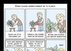 Enlace a Lo que las plantas necesitan
