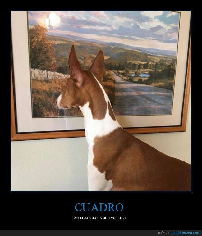 cuadro,perro,ventana