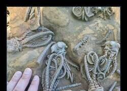 Enlace a Fósiles que parecen extraterrestres