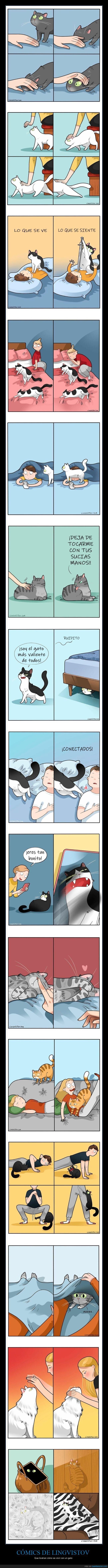 convivir,gatos,lingvistov