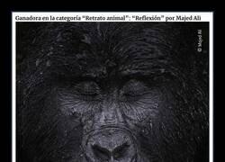 Enlace a Espectaculares fotografías ganadoras del concurso Wildlife Photographer del año 2021