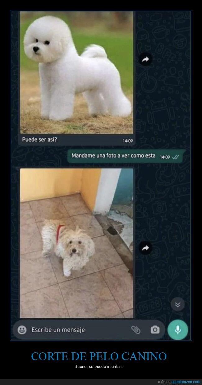 corte de pelo,perros,whatsapp