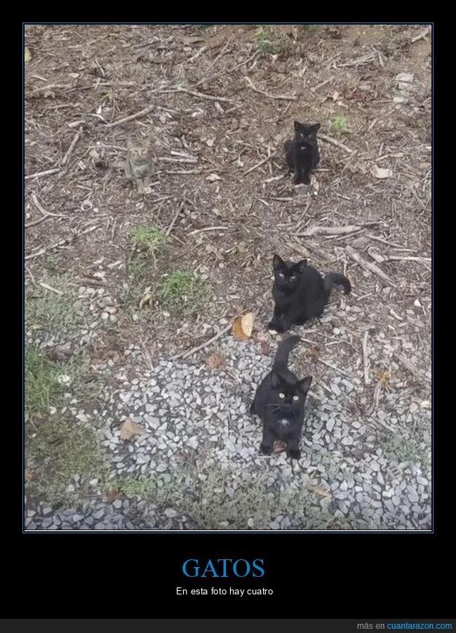 camuflaje,gatos