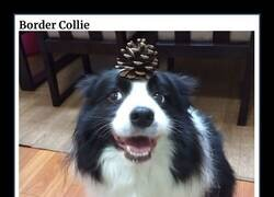 Enlace a Algunas de las razas de perros más inteligentes