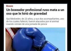 Enlace a Boxeador ruso VS Oso