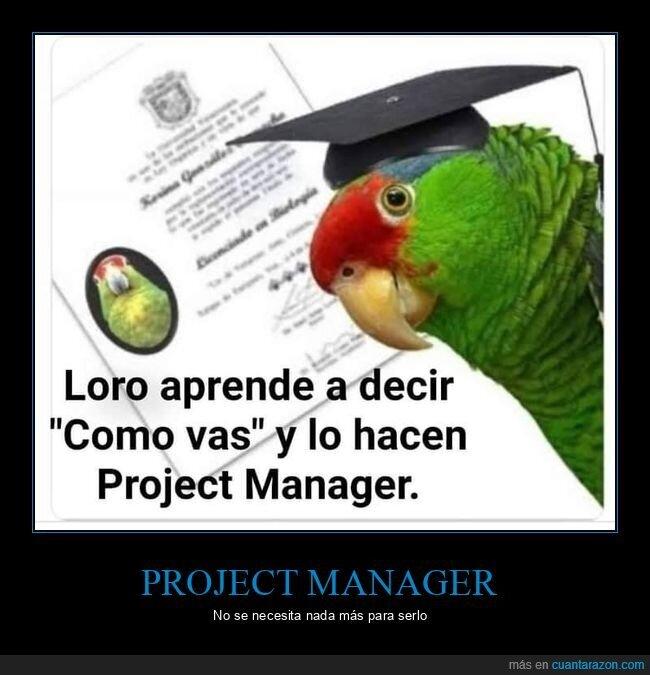 cómo vas,loro,project manager