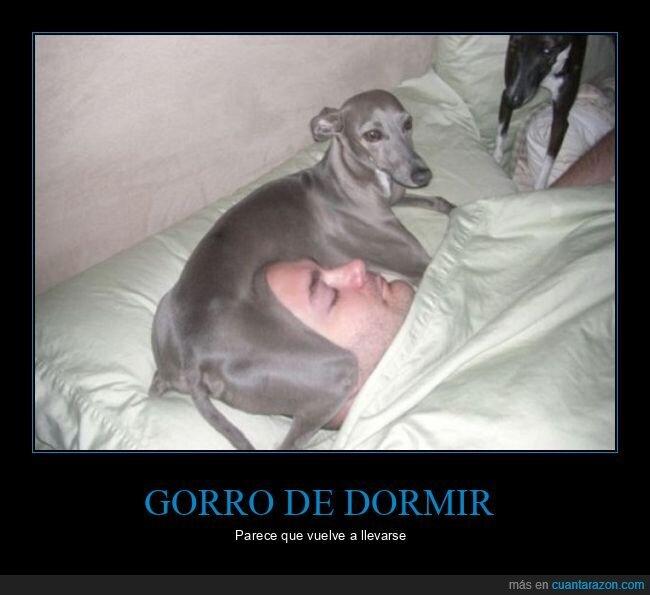 durmiendo,perro,wtf