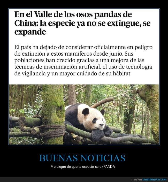 expandirse,extinguirse,osos panda