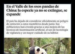Enlace a Bien por los pandas