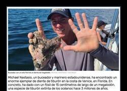 Enlace a Este buceador ha encontrado un diente de megalodón de 15 centímetros de largo