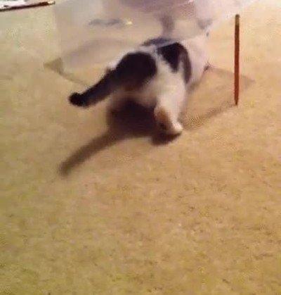 Enlace a Esta trampa para trollear a tu gato siempre funciona