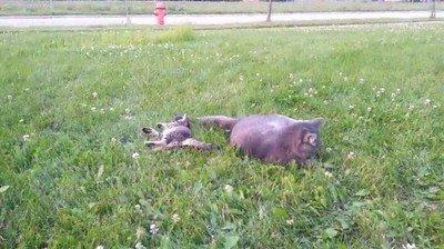 Enlace a En esta vida hay tres tipos de gato