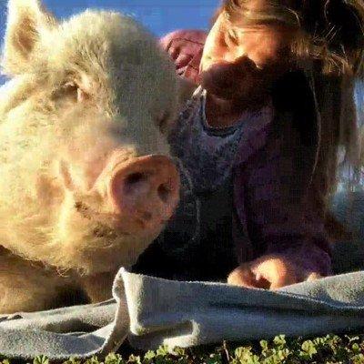 Enlace a Animales que lo único que quieren es un poco de mimos y sol