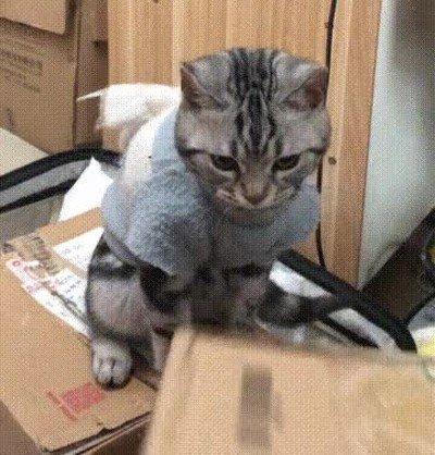 Enlace a Un gato entrenado para ayudar a cortar celo