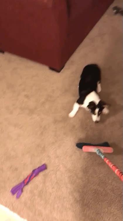 Enlace a Mi perro siempre se emociona cuando toca hacer limpieza en casa