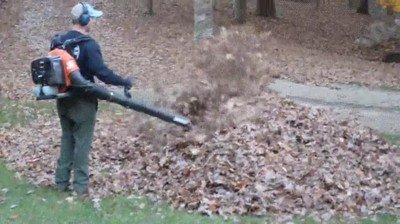 Enlace a Nunca sabes lo que puedes encontrar cuando soplas hojas