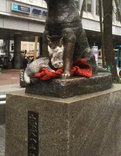Enlace a El espíritu de Hachiko perdura en todos los animales de Japón