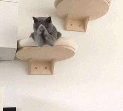 Enlace a Ojalá mi gato me dijera siempre que he hecho un gran trabajo